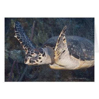 Underwater Life: A Hawksbill Sea Turtle 2 Greeting Card