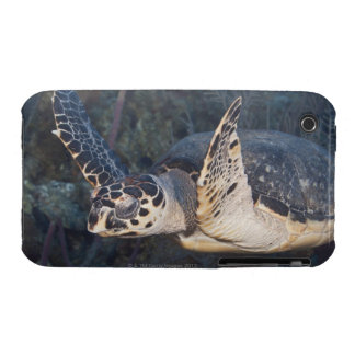 Underwater Life: A Hawksbill Sea Turtle 2 iPhone 3 Cases