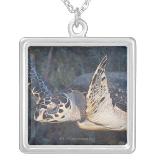 Underwater Life: A Hawksbill Sea Turtle 2 Silver Plated Necklace