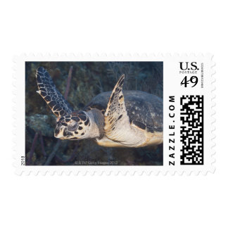 Underwater Life: A Hawksbill Sea Turtle 2 Stamps