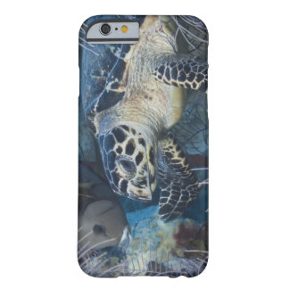 Underwater Life: A Hawksbill Sea Turtle Barely There iPhone 6 Case