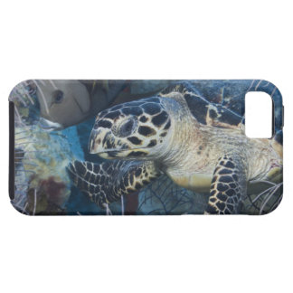Underwater Life: A Hawksbill Sea Turtle iPhone 5 Covers