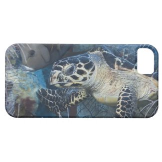 Underwater Life: A Hawksbill Sea Turtle iPhone 5 Cases