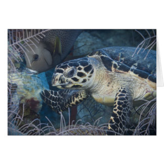 Underwater Life: A Hawksbill Sea Turtle Greeting Card