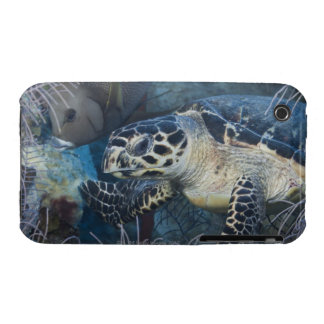 Underwater Life: A Hawksbill Sea Turtle iPhone 3 Cover