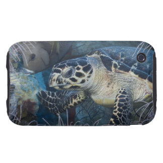 Underwater Life: A Hawksbill Sea Turtle iPhone 3 Tough Case