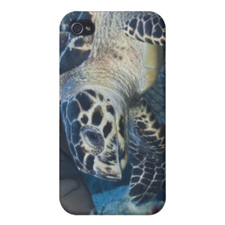 Underwater Life: A Hawksbill Sea Turtle iPhone 4/4S Covers