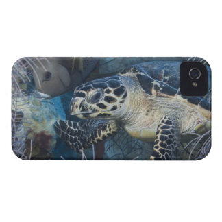 Underwater Life: A Hawksbill Sea Turtle iPhone 4 Covers