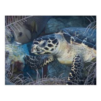 Underwater Life: A Hawksbill Sea Turtle Postcard