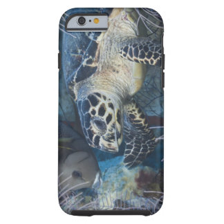 Underwater Life: A Hawksbill Sea Turtle Tough iPhone 6 Case