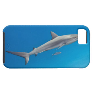 Underwater life: Carcharhinus perezi swimming in iPhone 5 Covers