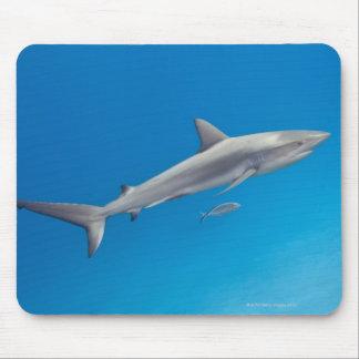 Underwater life: Carcharhinus perezi swimming in Mousepads