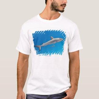 Underwater life: Carcharhinus perezi swimming in T-Shirt