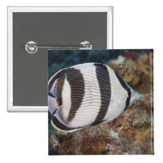 Underwater Life; FISH:  A Banded Butterflyfish Pin