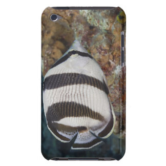 Underwater Life; FISH: A Banded Butterflyfish iPod Case-Mate Cases