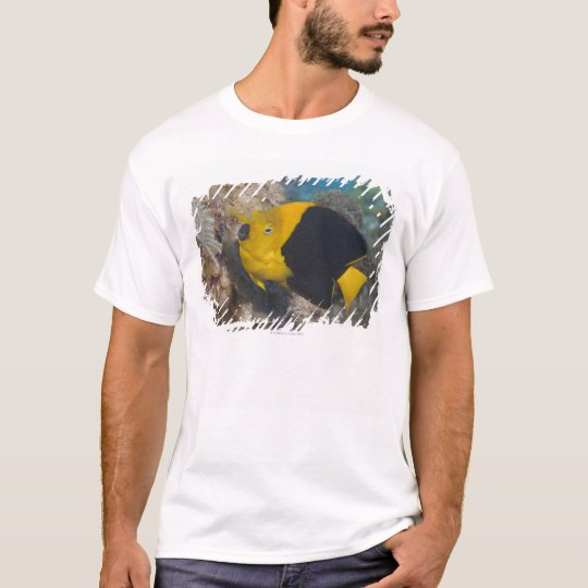 Underwater Life, FISH:  A colorful Rock Beauty T-Shirt