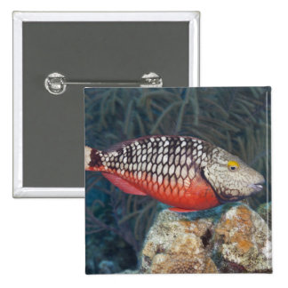 Underwater Life, FISH: a colorful Stoplight Button
