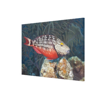 Underwater Life, FISH: a colorful Stoplight Canvas Print
