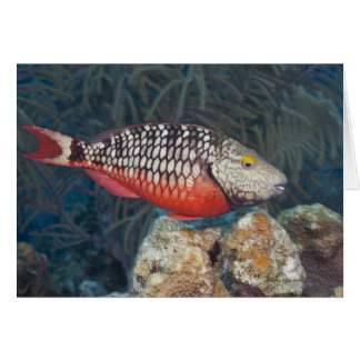 Underwater Life, FISH: a colorful Stoplight Card