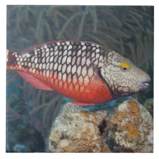 Underwater Life, FISH: a colorful Stoplight Ceramic Tile