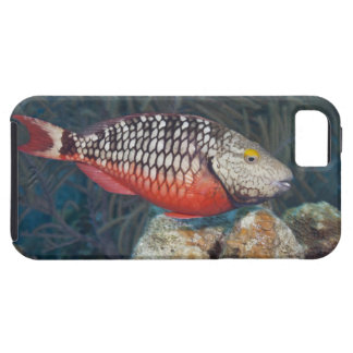 Underwater Life, FISH: a colorful Stoplight iPhone SE/5/5s Case