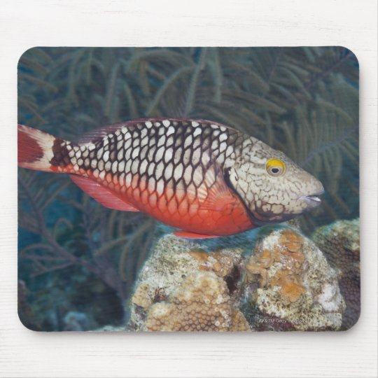 Underwater Life, FISH: a colorful Stoplight Mouse Pad