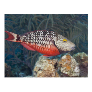 Underwater Life, FISH: a colorful Stoplight Postcard