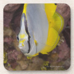 Underwater Life, FISH:  A colorful tropical Beverage Coaster