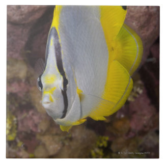 Underwater Life, FISH:  A colorful tropical Tile