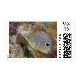 Underwater Life, FISH: A Foureye Butterflyfish Postage Stamp