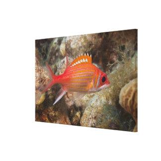 Underwater Life, FISH:  a Longjaw Squirrelfish Canvas Print