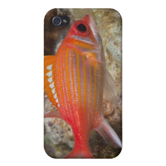 Underwater Life, FISH: a Longjaw Squirrelfish Case For iPhone 4