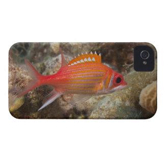 Underwater Life, FISH:  a Longjaw Squirrelfish iPhone 4 Case-Mate Case