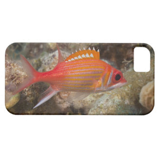 Underwater Life, FISH:  a Longjaw Squirrelfish iPhone SE/5/5s Case