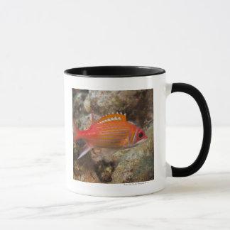 Underwater Life, FISH:  a Longjaw Squirrelfish Mug