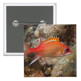 Underwater Life, FISH:  a Longjaw Squirrelfish Pinback Button