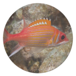 Underwater Life, FISH:  a Longjaw Squirrelfish Plates
