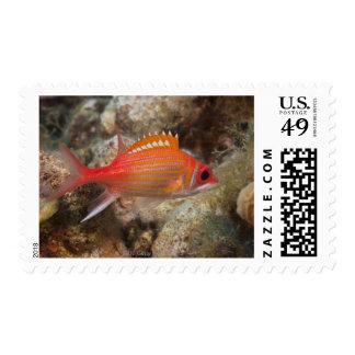 Underwater Life, FISH:  a Longjaw Squirrelfish Postage Stamp