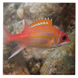 Underwater Life, FISH:  a Longjaw Squirrelfish Tile