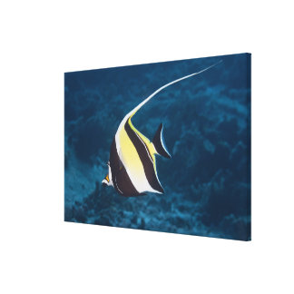 Underwater life;FISH: A Moorish Idol (Zanclus Canvas Print