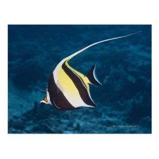Underwater life;FISH: A Moorish Idol (Zanclus Postcard