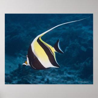 Underwater life;FISH: A Moorish Idol (Zanclus Print