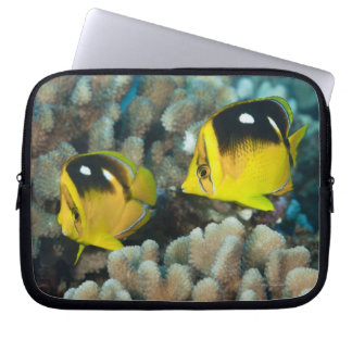 Underwater Life; FISH:  A pair of Fourspot Laptop Sleeve