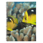 Underwater Life; FISH:  A pair of Fourspot Notebooks