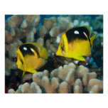 Underwater Life; FISH:  A pair of Fourspot Posters