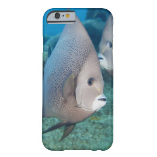 Underwater Life, FISH:  a pair of Gray Angelfish Barely There iPhone 6 Case