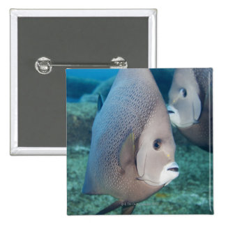 Underwater Life, FISH:  a pair of Gray Angelfish Button