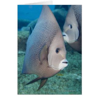 Underwater Life, FISH:  a pair of Gray Angelfish Card