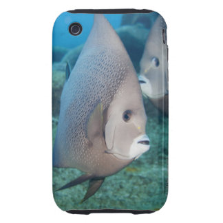 Underwater Life, FISH:  a pair of Gray Angelfish iPhone 3 Tough Case