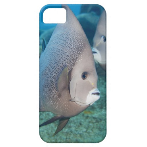 Underwater Life, FISH:  a pair of Gray Angelfish iPhone 5 Cover